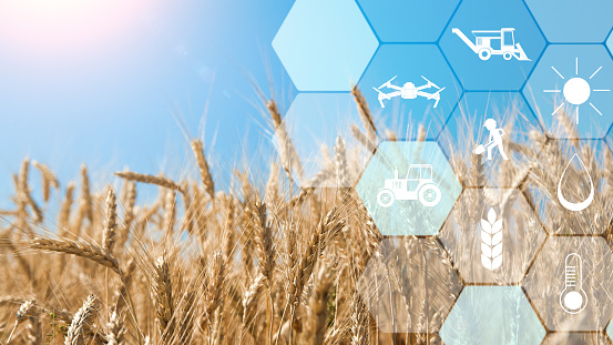 Precision agriculture network icons on wheat field background 1160220952
