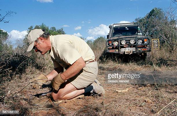 Predator biologist Laurence Frank sets up an elaborate trap for a lion on Mugie Ranch in the Laikipia District Which had been located through...