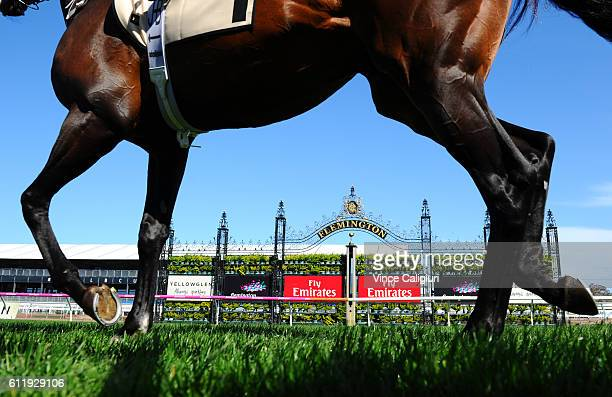 Preferment heads to the barrier start before Race 7 Yellowglen Turnbull Stakes during Melbourne Racing at Flemington Racecourse on October 2 2016 in...
