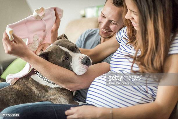 pregnancy - american pit bull terrier stock pictures, royalty-free photos & images