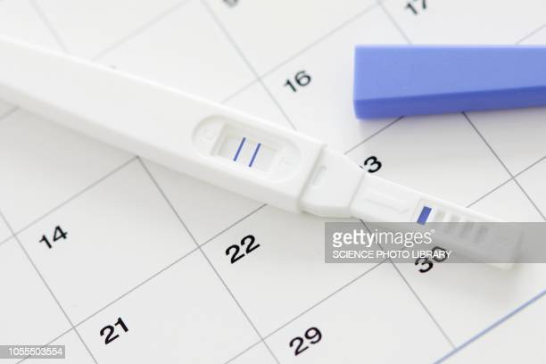 pregnancy test showing positive result and calendar - human fertility stock pictures, royalty-free photos & images