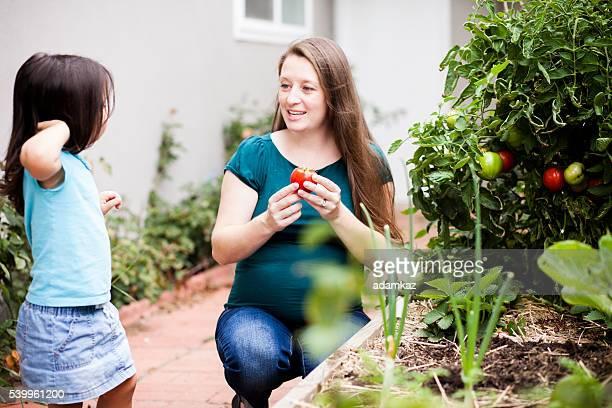 Enceinte mère avec sa fille récolte de tomates