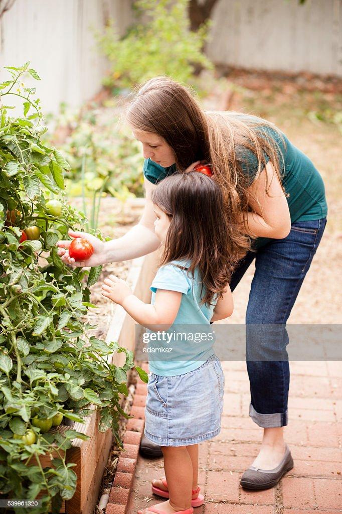 Schwangere Mutter mit ihrer Tochter auswählen Tomaten : Stock-Foto