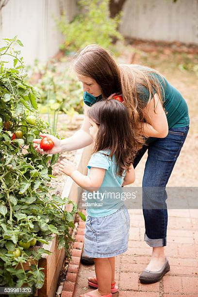 Schwangere Mutter mit ihrer Tochter auswählen Tomaten