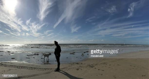 pregnant woman at the beach - north holland stock pictures, royalty-free photos & images