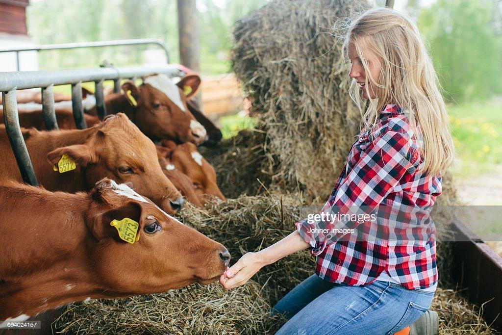 Pregnant woman on farm : Stock Photo