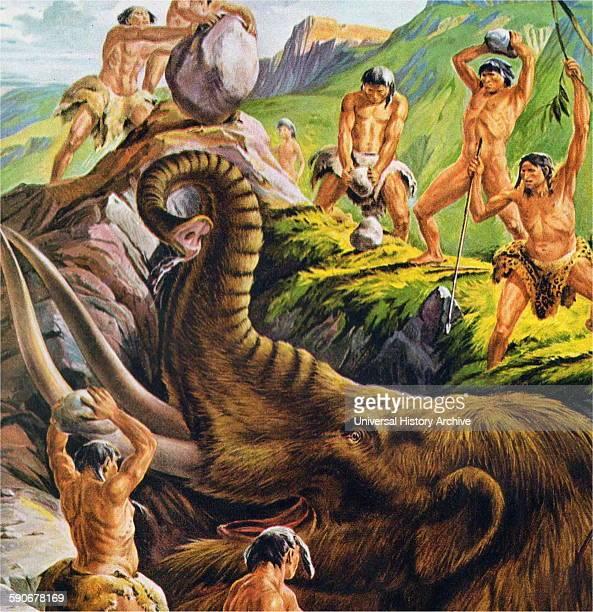Prehistoric cavemen hunt a Mastodon 1940s Illustration Mastodons are any species of extinct proboscideans in the genus Mammut distantly related to...
