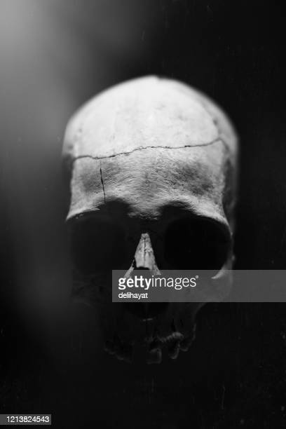 prehistoric human skull - human skull stock pictures, royalty-free photos & images