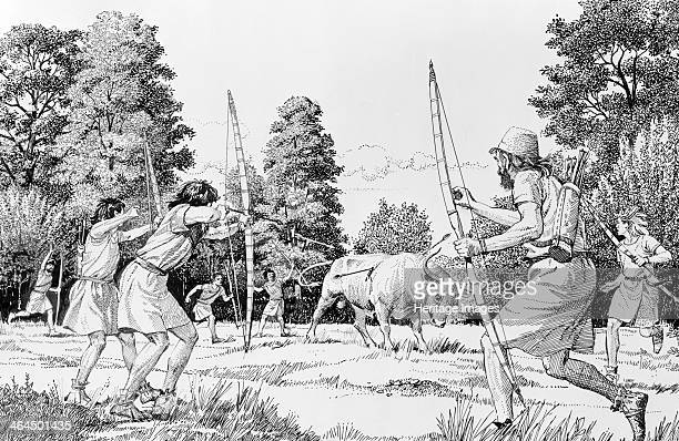Prehistoric hunting of aurochs This artist's impression shows hunters killing the forestdwelling aurochs which had just been flushed out into an...