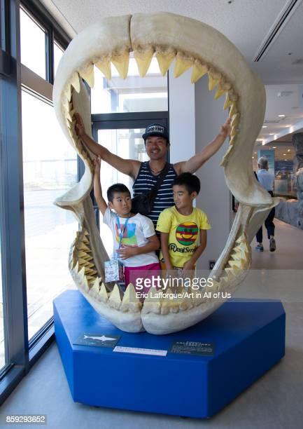 Prehistoric shark teeth on display at Kaiyukan aquarium Kansai region Osaka Japan on August 19 2017 in Osaka Japan