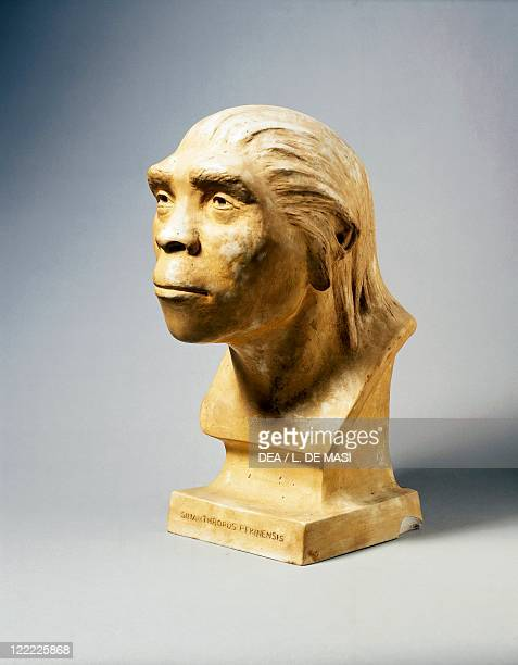 Prehistory China Reconstruction of Peking Man discovered at Zhoukoudian Replica by Weindenreich