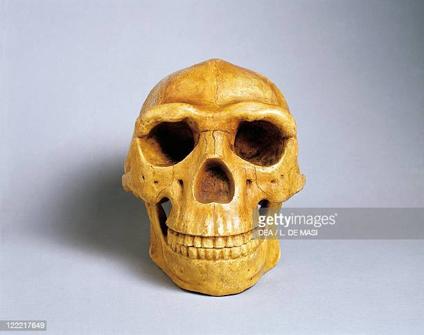 Prehistory China Reconstruction of Peking Man's skull with mandible Replica by Franz Weidenreich