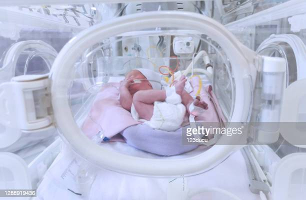 premature baby in nicu - premature baby incubator stock pictures, royalty-free photos & images