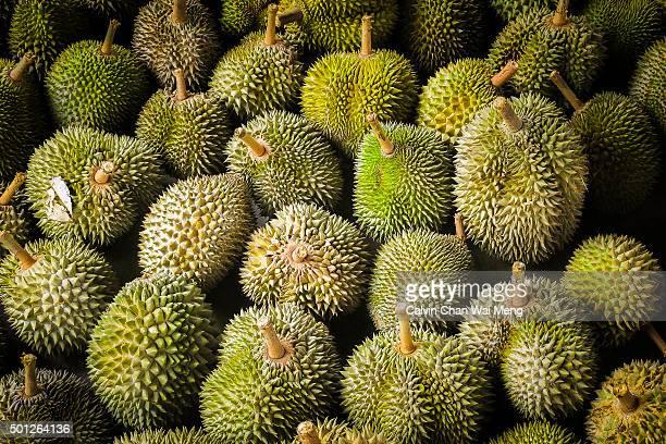 Premium durian and trees