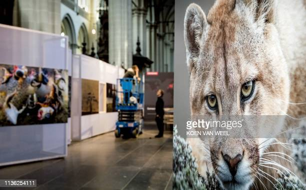 Preparations of the World Press Photo Contest exhibition are underway in De Nieuwe Kerk in Amsterdam The Netherlands on April 11 2019 The exhibition...