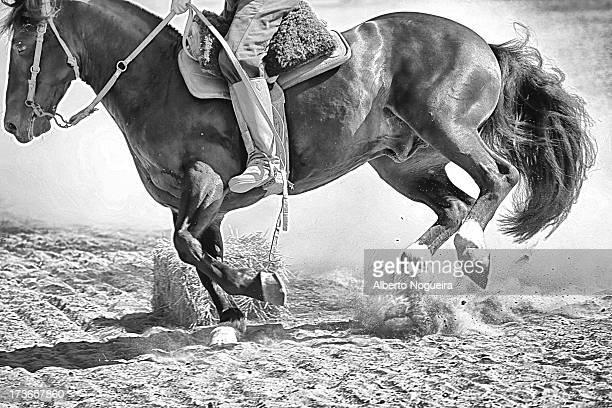 "Preparing Crioulo Horse for ""Freio de Ouro"" - Rio Grande do Sul - Brazil"