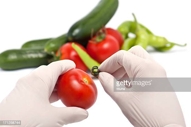 preparing food, organic food and drink photo
