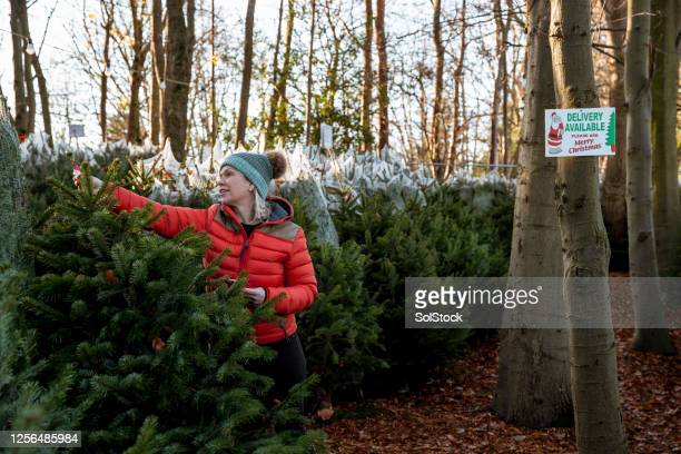 preparing for christmas - christmas tree stock pictures, royalty-free photos & images