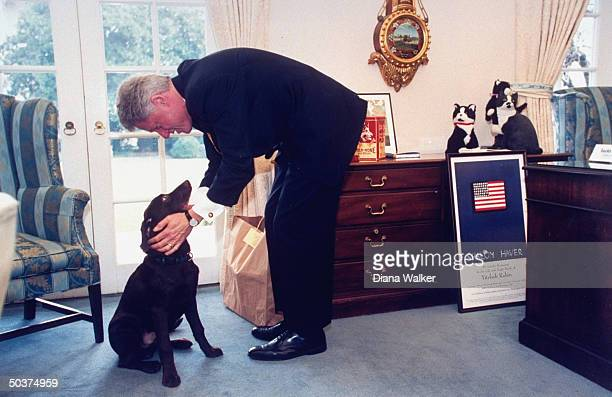Pres Bill Clinton bending over to congratulate his new dog Buddy for proper sitting paw offering in White House Oval Office