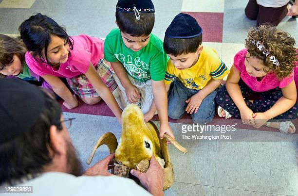 Preschoolers at Gan Israel Preschool from left Alyssa Silberman Liya Krut Yoav Avneri Yural Avneri and Lisa Steinberg touch the horns of a fake ram's...
