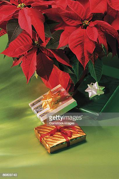 presents by poinsettia - noche buena stock pictures, royalty-free photos & images