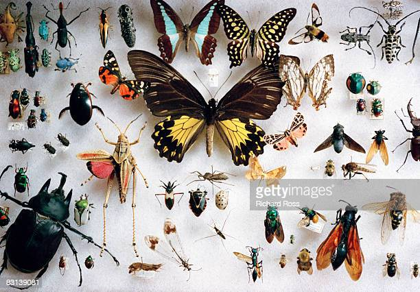 preserved butterflies and other insects - collection photos et images de collection