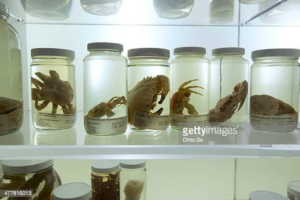 Preserved marine specimens are on display in the Schad Gallery of Biodiversity located on the second floor of the ROM The Royal Ontario Museum...