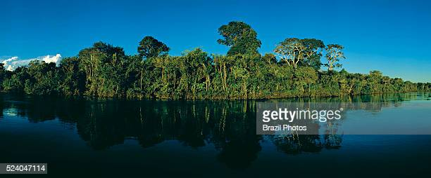 Preserved riverside and dense forest along Javae River bank in Bananal Island Tocantins State Amazon rainforest Brazil
