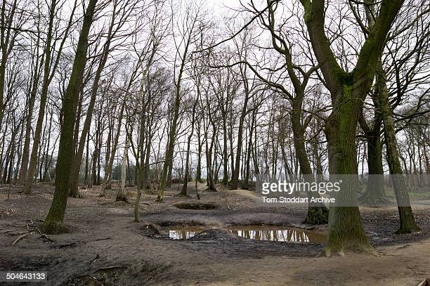 A preserved World War One trench at Sanctuary Wood near Ypres in Belgium The wood was given it's name because soldiers sheltered here from a...