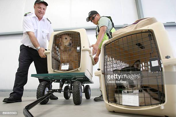 President and CEO Don Weisel helps load pets for takeoff on the southern California maiden voyage of Pet Airways on July 16 2009 in the Los...