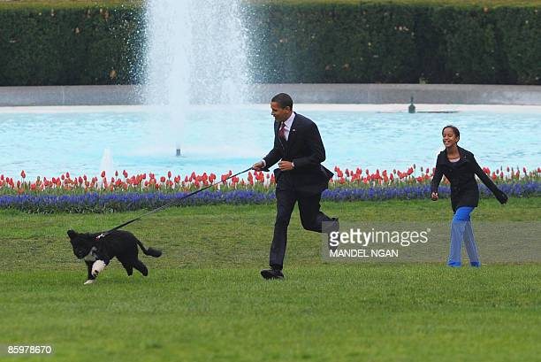 US President Barack Obama and daughter play with the new family dog Bo a Portuguese water dog on April 14 2009 on the South Lawn of the White House...