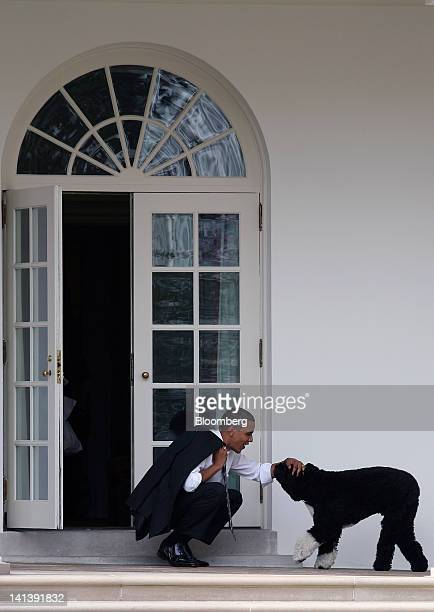 US President Barack Obama greets the family dog Bo outside the Oval Office of the White House in Washington DC US on Thursday March 15 2012 Bo a...