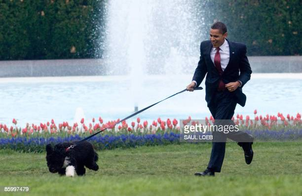 US President Barack Obama is pulled by the family's new sixmonth old Portuguese water dog Bo as he walks on the South Lawn of the White House in...