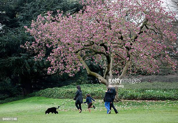 S President Barack Obama right and First Lady Michelle Obama left walk with their daughters Sasha second from left Malia and the family's new dog Bo...