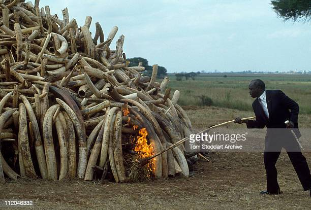President Daniel Arap Moi setting fire to tusks worth 3 million US dollars confiscated from poachers by Kenyan Game Wardens