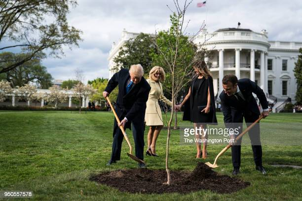 President Donald J Trump and French President Emmanuel Macron plant a tree as first lady Melania Trump and Macron's wife Brigitte Macron watch on the...