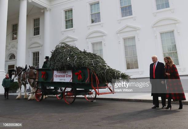S President Donald Trump and first lady Melania Trump inspect the North Carolina grown Fraser Fir Christmas Tree at the North Portico as it makes its...