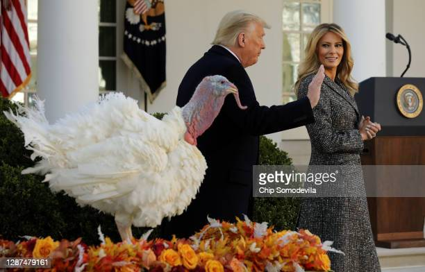 President Donald Trump and first lady Melania Trump leave the Rose Garden after 'pardoning' the national Thanksgiving Turkey at the White House...