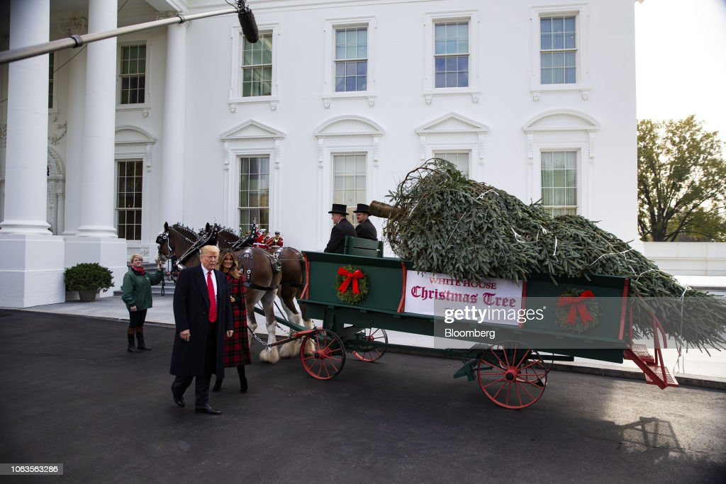 President Trump And First Lady Take Part In White House Christmas Tree Delivery : News Photo