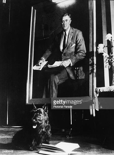 President Franklin D Roosevelt's pet Scottish Terrier 'Fala' sits beside an open book in front of a portrait of the president 1940s