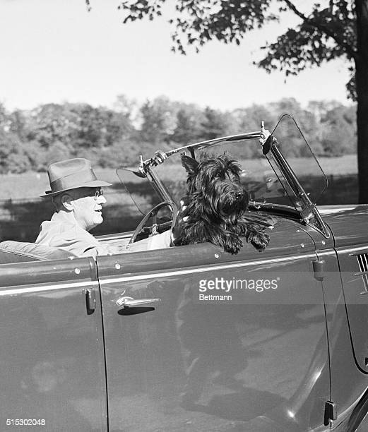 President Franklin Delano Roosevelt takes a drive with his Scottish terrier, Fala, riding in the passenger seat.