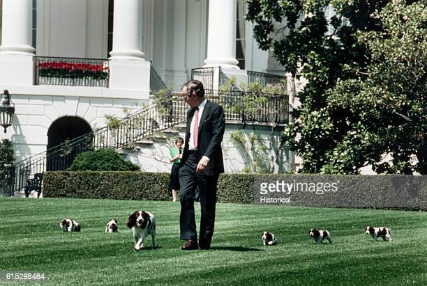 President George Bush walks across the White House lawn with his springer spaniel Millie and her puppies April 20 1989