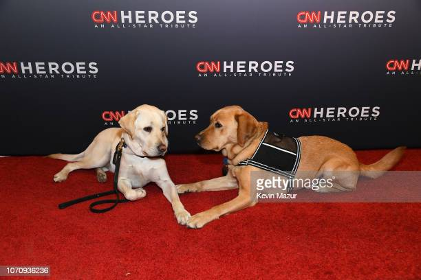 President George HW Bush's service dog Sully and 2018 CNN Hero Chris Stout's service dog attend the 12th Annual CNN Heroes An AllStar Tribute at...