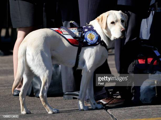 President George HW Bush's service dog Sully stands with members of the Bush family during a departure ceremony to Washington D C at Ellington Field...