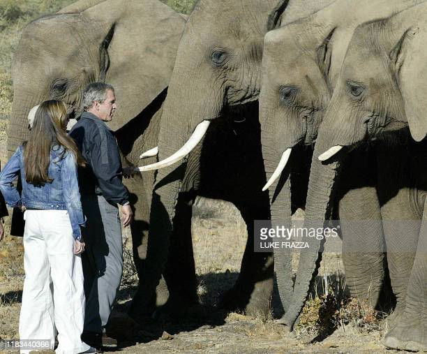 US President George W Bush and his daughter Barbara Bush look at elephants during their visit to the Mokolodi Nature Preserve in Gaborone Botswana 10...