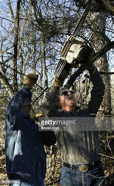 US President George W Bush helps clean up cedar underbrush on the Bush Ranch in Crawford Texas The cedar absorbs a significant amount of ground water...