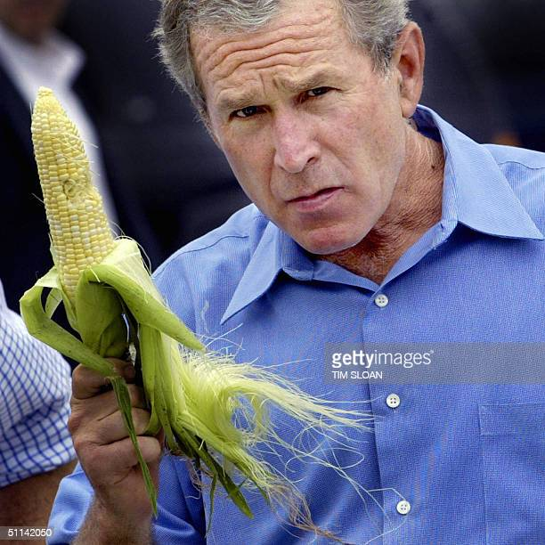 President George W Bush holds an ear of corn during an impromptu stop of his motorcarde at a local farmers market after a campaign rally 04 August...