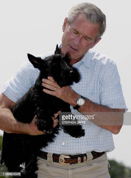 US President George W Bush holds his dog Barney after a press conference 13 August 2003 at his ranch in Crawford Texas Bush after meetings with his...