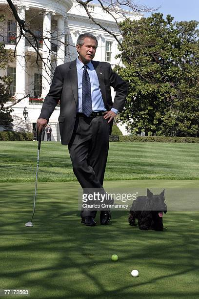 President George W Bush plays golf on the South Lawn of the White House with his dogs Barney and Spot April 15 2003 in Washington DC After a couple...