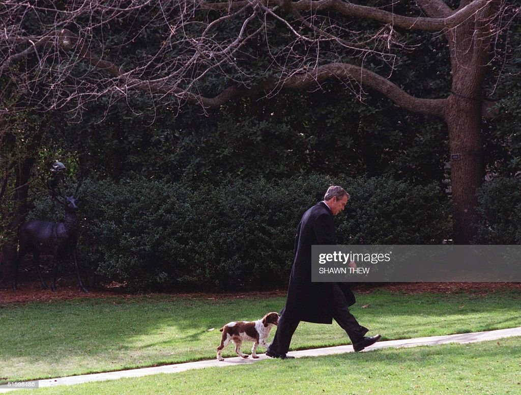 Us President George W Bush Walks With His Pet Dog Pictures Getty